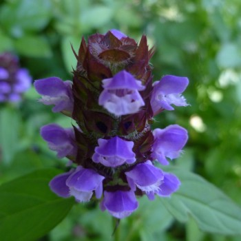Self Heal by Jesse Taylor